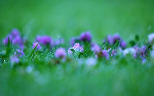 Violet+Green+1920x1200